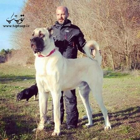 عکس سگ مخصوص نگهبانی باغ