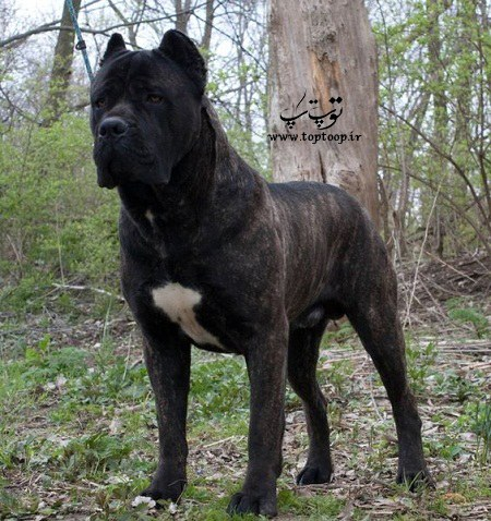 عکس سگهای نگهبان اصیل