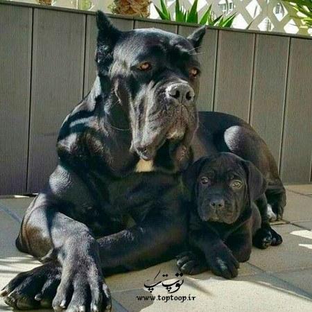 عکس توله سگ نگهبان