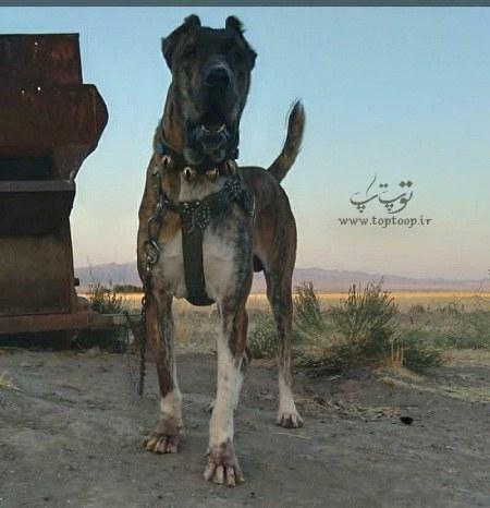 عکس سگ نگهبان خوفناک