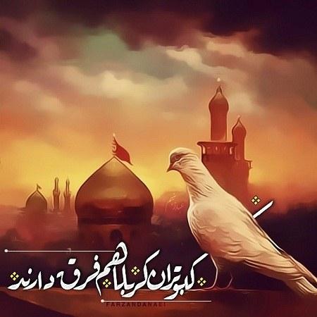 عکس پروفایل کبوتر حرم امام حسین