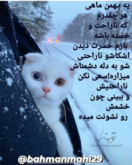 آلبوم عکس پروفایل زیبا راجب بهمن ماهیا