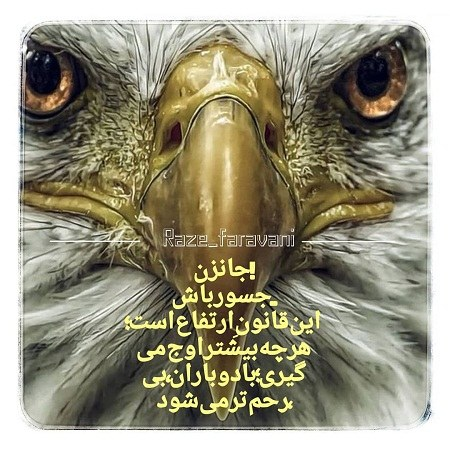 تصاویر متن دار قشنگ از عقاب