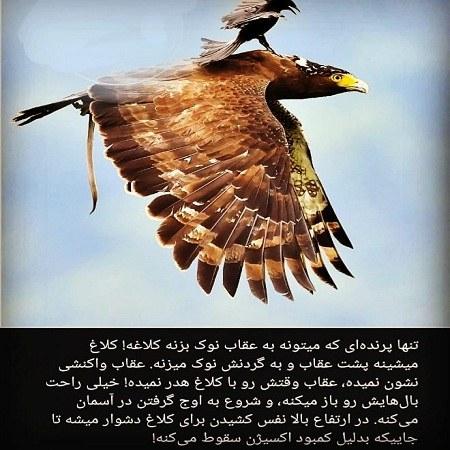 عکس نوشته عقاب و کلاغ