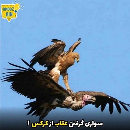 دانلود عکس نوشته عقاب
