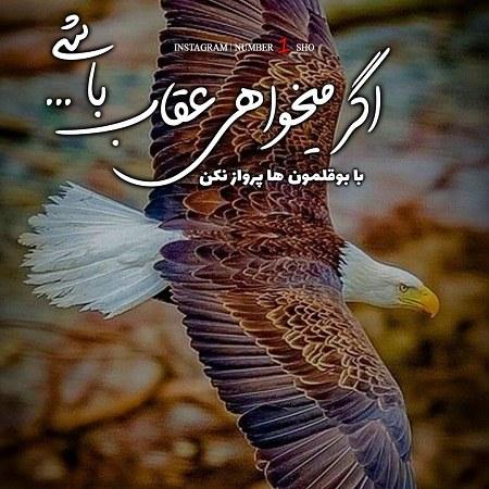 عکس پروفایل عقاب نوشته