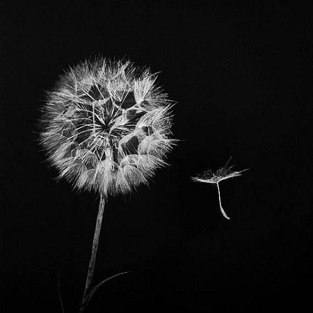 گالری عکس سیاه و سفید مخصوص پروفایل