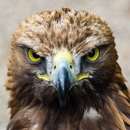 عکس عقاب از نمای نزدیک