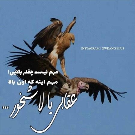 عکس نوشته از قدرت عقاب