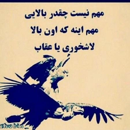 عکس نوشته سنگین راجب عقاب و لاشخور