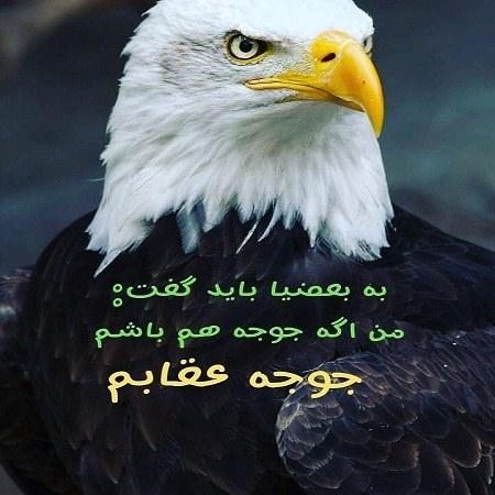عکس نوشته طعنه دار و خفن عقاب