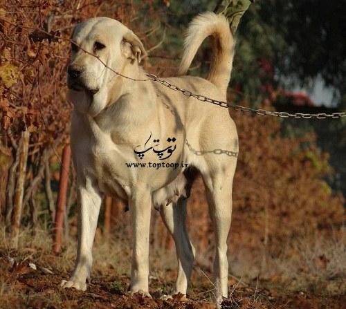 آلبوم عکس سگهای بزرگ و وحشی