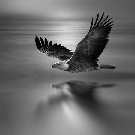 عکس عقاب در آسمان