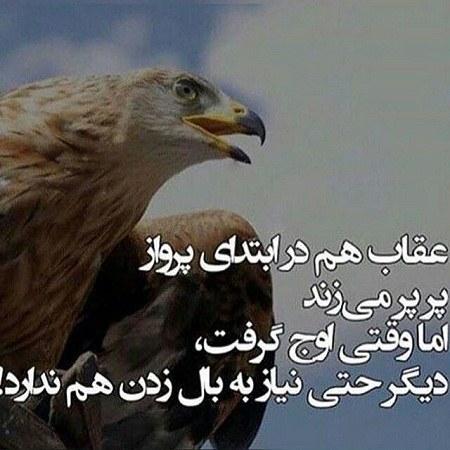عکس پروفایل عقاب متن دار
