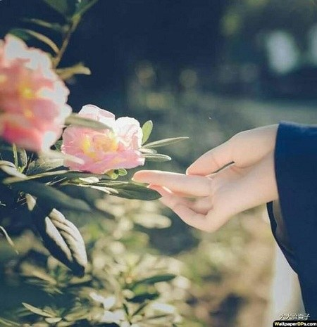 عکس دخترونه گل رز بدست برای پروفایل