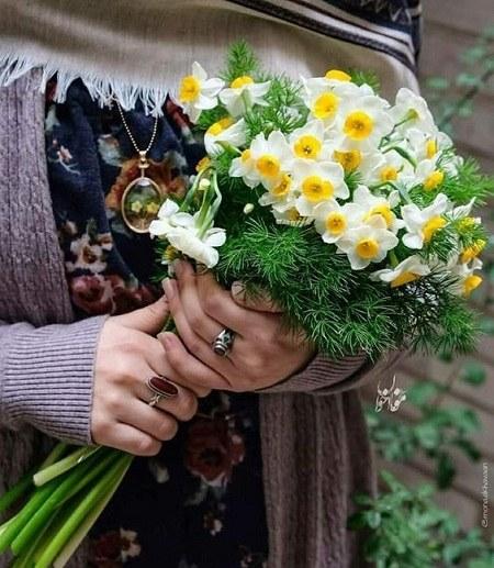 عکس پروفایل گل نرگس امام زمانی زیبا