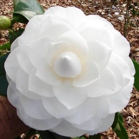 عکس گل رمانتیک برای پروفایل
