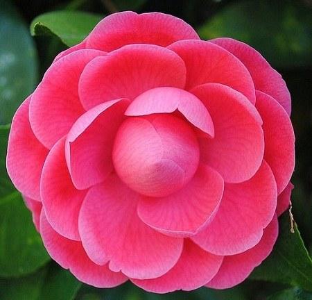 عکس پروفایل گل های رنگی و خوشگل
