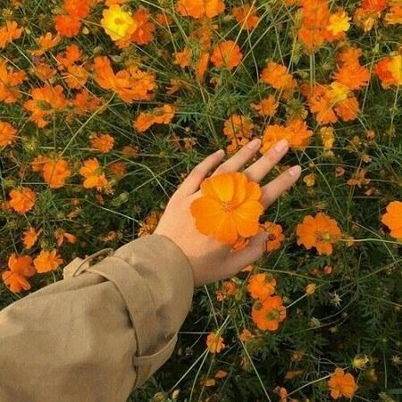 عکس گل رز قشنگ برای پروفایل