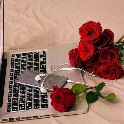 عکس پروفایل گل سرخ روی میز کامپیوتر