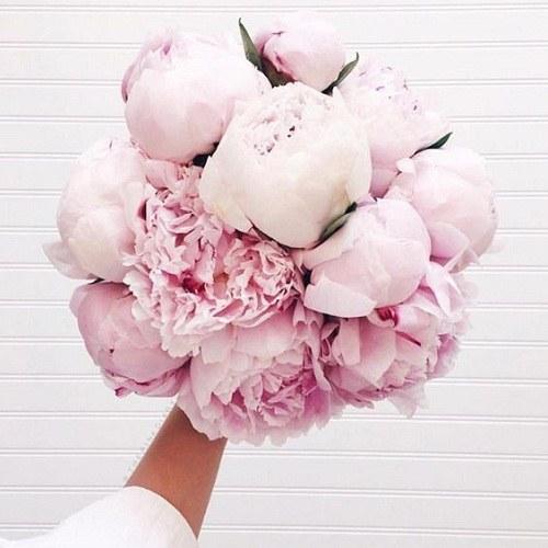 عکس از گل های رنگارنگ