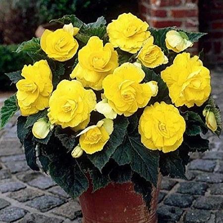 عکس گلدون و گل برای پروفایل