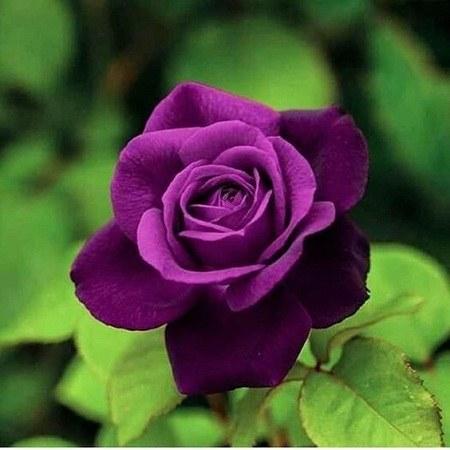 عکس گل های رویایی برای پروفایل