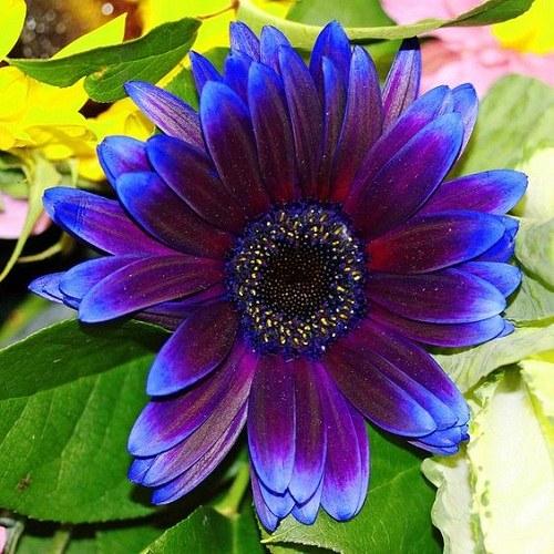 عکس گل زیبای بنفش برای پروفایل