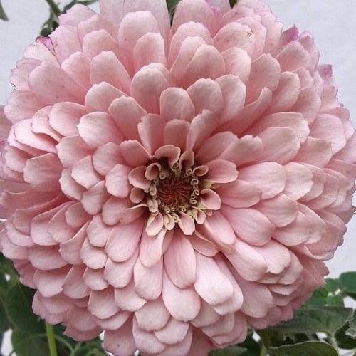 عکس زیباترین گل ها برای پروفایل