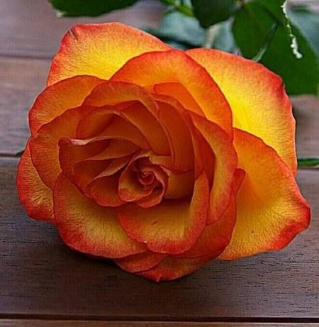 عکس پروفایل زیباترین گل
