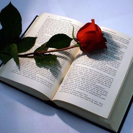 پروفایل گل رز روی کتاب