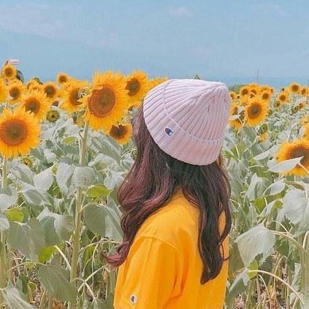 عکس پروفایل گل آفتابگردان دخترانه