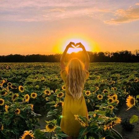 عکس گل آفتابگردان برای پروفایل