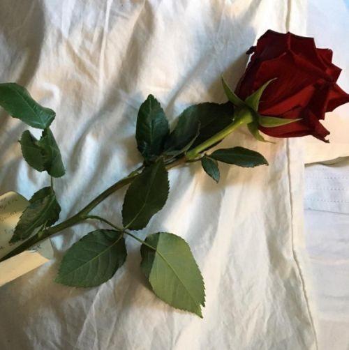 عکس پروفایل از گل های مختلف و خوشگل