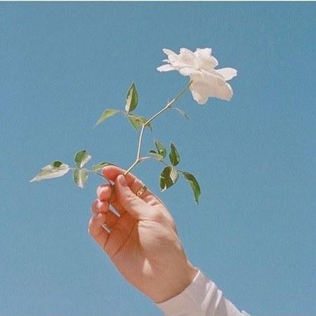 عکس پروفایل گل در دست