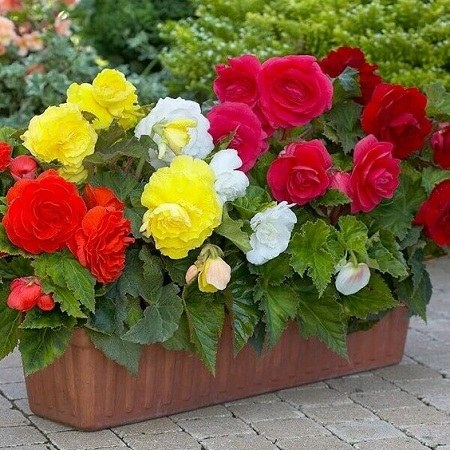 عکس گل و باغچه برای پروفایل